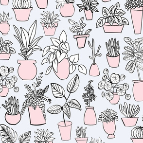 Pink potted plants