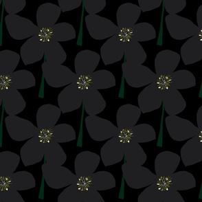 HELLEBORE on black