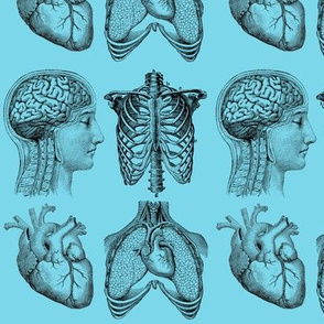 Anatomy Lesson in BLue