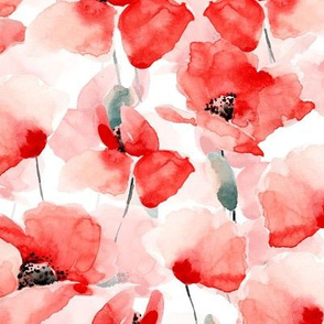"14"" Poppy - Hand drawn watercolor poppies on white"