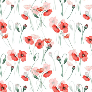 12%22_wildflowers_poppies_poppy_flower_floral_summer_blossom_nursery_feminine_double_on_white