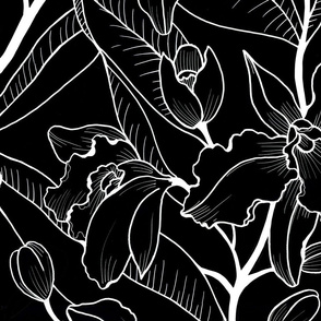 Black and White Tropical Orchid