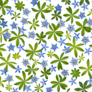 borage and sweet woodruff pattern color