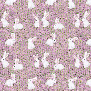 white rabbits on pink carpet phlox