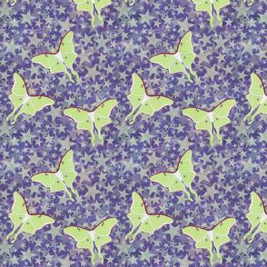 luna moths and stars on purple