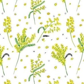 Yellow Mimosas
