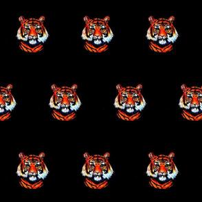 Tigers on black