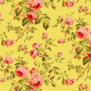 Dolly Rose ~  Bright on Aristocrat