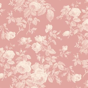 Dolly Rose ~  Cosmic Latte  on Pavlova