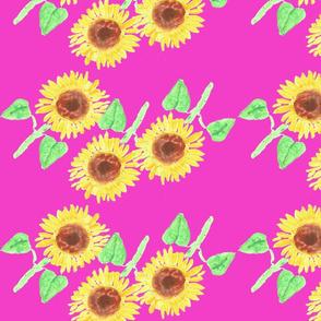 sunflower. 2