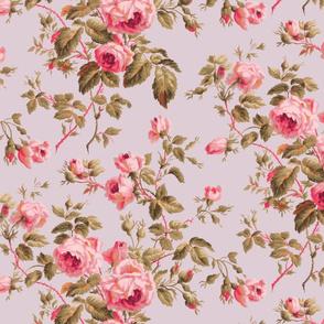 Dolly Rose ~  Dauphine de Versailles