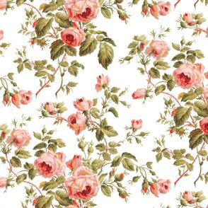 Dolly Rose ~  White
