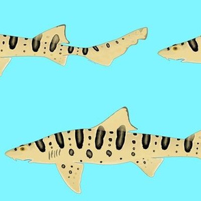 Leopard Shark on light blue