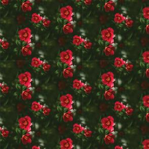 Prickly Wild Rose Pattern