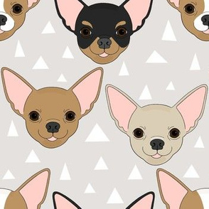 Chihuahua - greige
