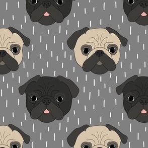 Pugs on grey