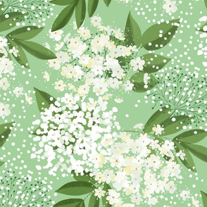 elderflower on light green large