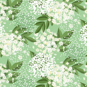 elderflower on light green small