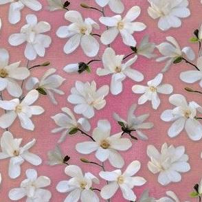 Magnolia Kobus on pink