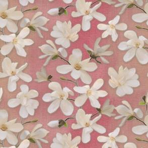 Magnolia Kobus on rose-pink