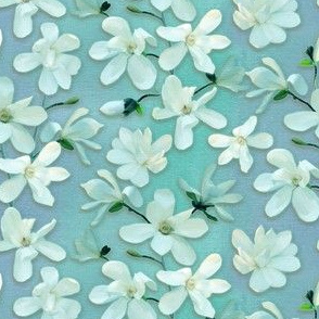 Magnolia Kobus - mint 1