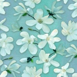 Magnolia Kobus - mint