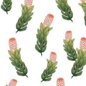 Protea 1 Coral Green