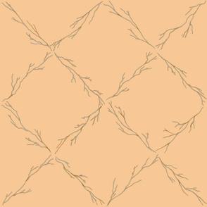Branch lattice on tequila