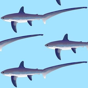C. Thresher Shark on light blue