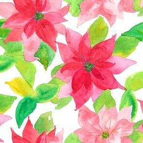 Poinsettia In Pinks