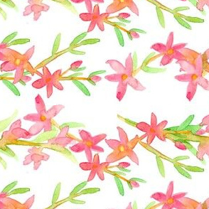 Crowea Flower Vines