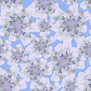 pale lilac flowers with blue background