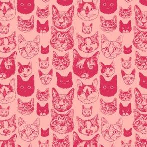 cats - small scale blush + coral