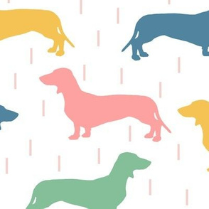 Dachshunds - multi colored