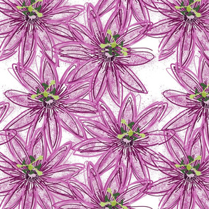 Purple passion white bg