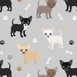 Chihuahua Dogs Gray