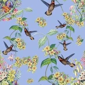 HUMMINGBIRD VINE (PERIWINKLE)