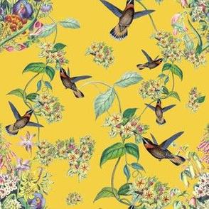 HUMMINGBIRD VINE (YELLOW)