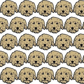 tan goldendoodles - tan labradoodles - tan poodles