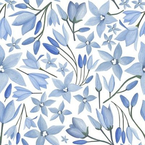 Australian Bluebells