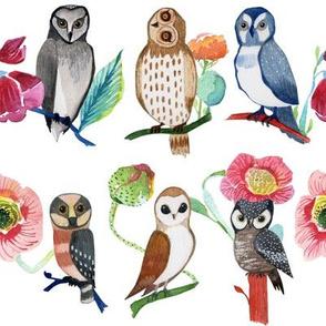 Owl Hangout