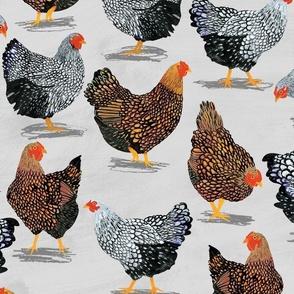 Plucky Chickens Grey