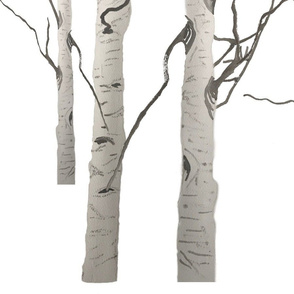 White Birch Forest Tree Trunks in Grey and White