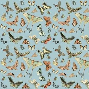 East Fork Butterflies