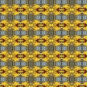 Yellow Spring Blooms
