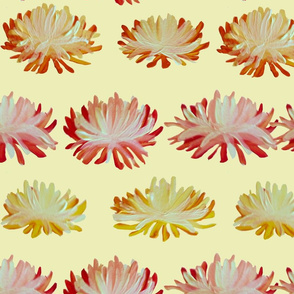Chrysanthemum pattern TenderYellow