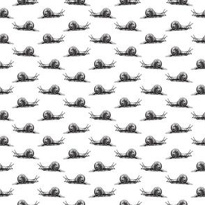 Vintage Snail Art Black & White Pattern (Small Scale)