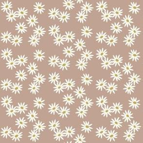 daisies - powder