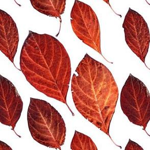 Fall Pressed Leaves