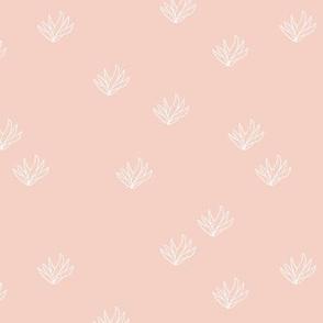 Delicate Aloe Vera plants succulent garden boho summer island vibes soft peach pink